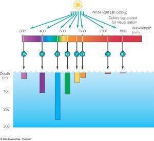 visible-spectrum-going-through-ocean-waters1
